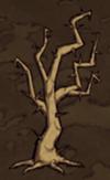 100px-Spiky_tree