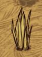Grass_tuft_growing